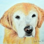 Logan, Golden Retriever