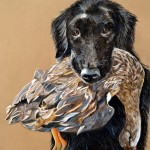 Neka, Flat Coated Retriever