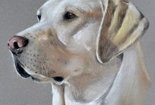 Reeves, Labrador Retriever