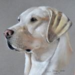 dog-portrait-reeves-labrador-retriever