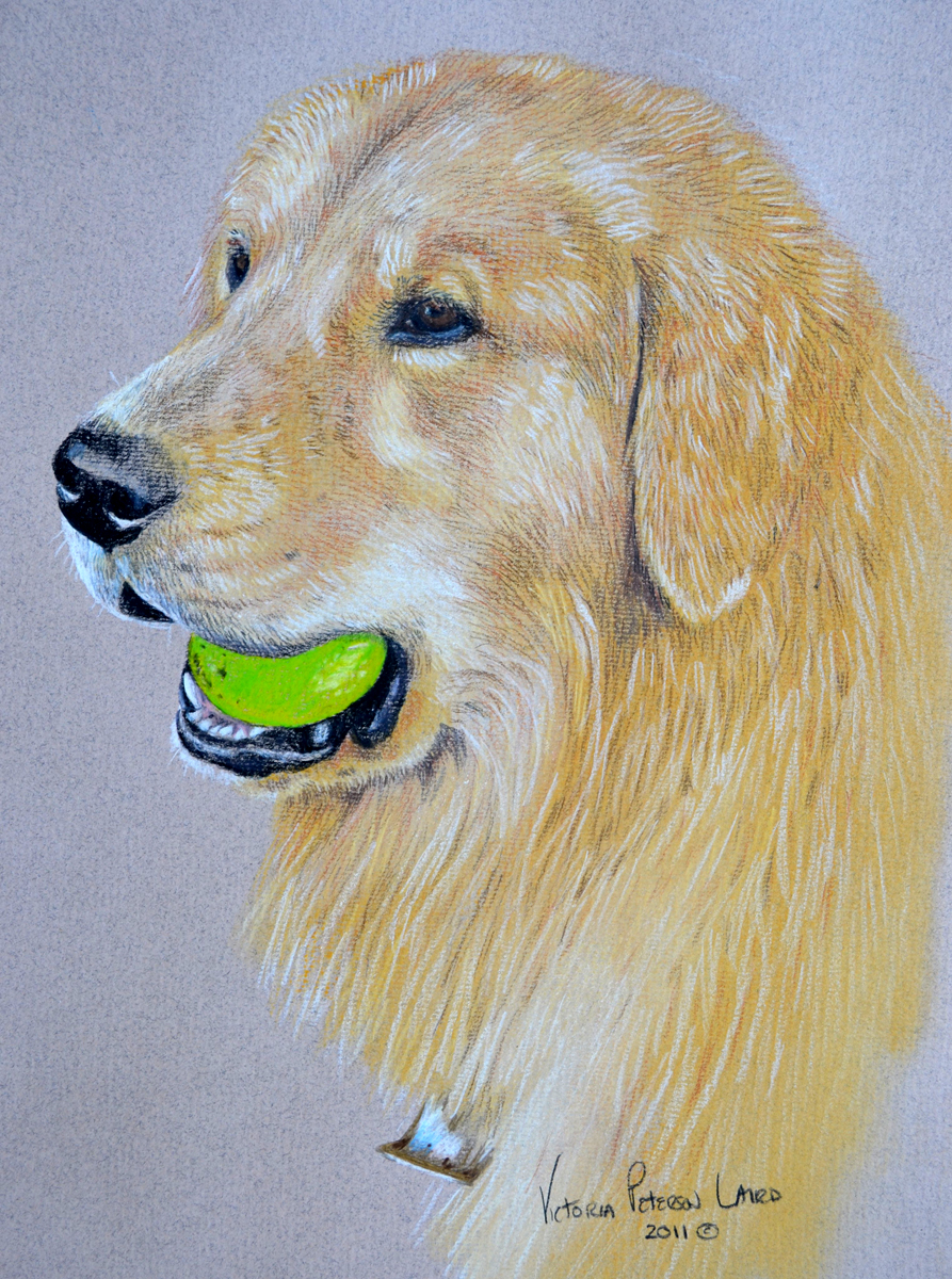 Riley, Golden Retriever