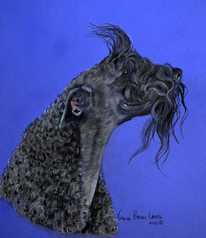 Ruby, Kerry Blue Terrier
