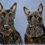 dog-portrait-scotties