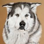 Shiloh, Siberian Husky
