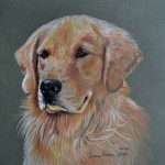 Simone, Golden Retriever