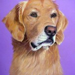 Skye, Golden Retriever