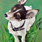 dog-portrait-terrier