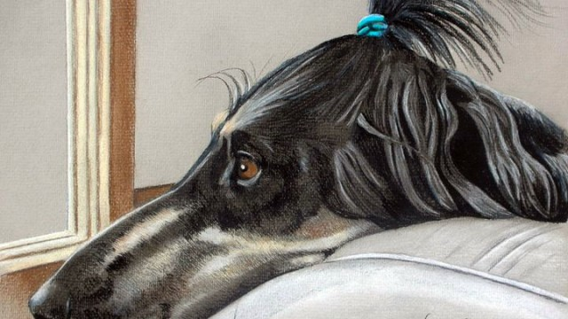 Uma, Afghan Hound [Prints available. Limited edition of 50]
