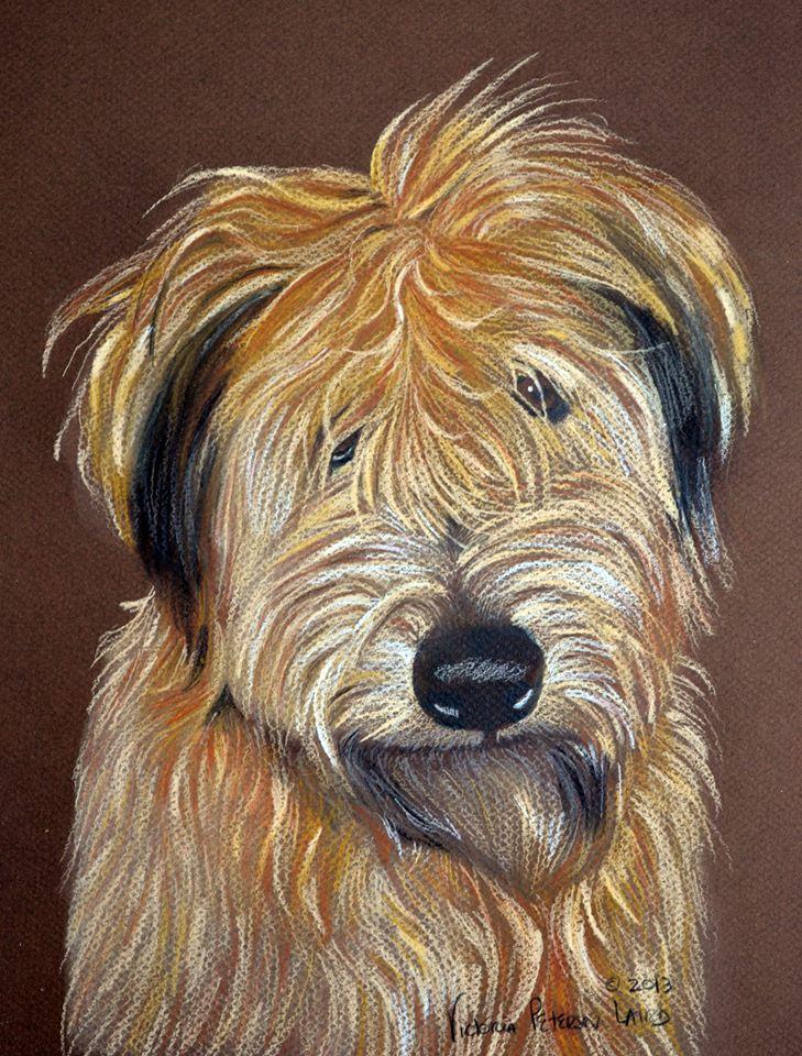 Harris, Wheaten Terrier
