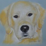 Lilly, Golden Retriever