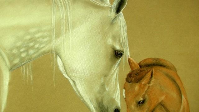 Charm and Faith, Arabians