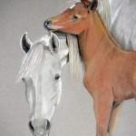 Faith and Charm, Arabians