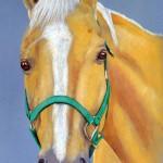 Spud, Quarter Horse