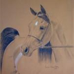 Valle Jamal, Arabian Stallion
