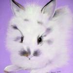 Jack, Bunny